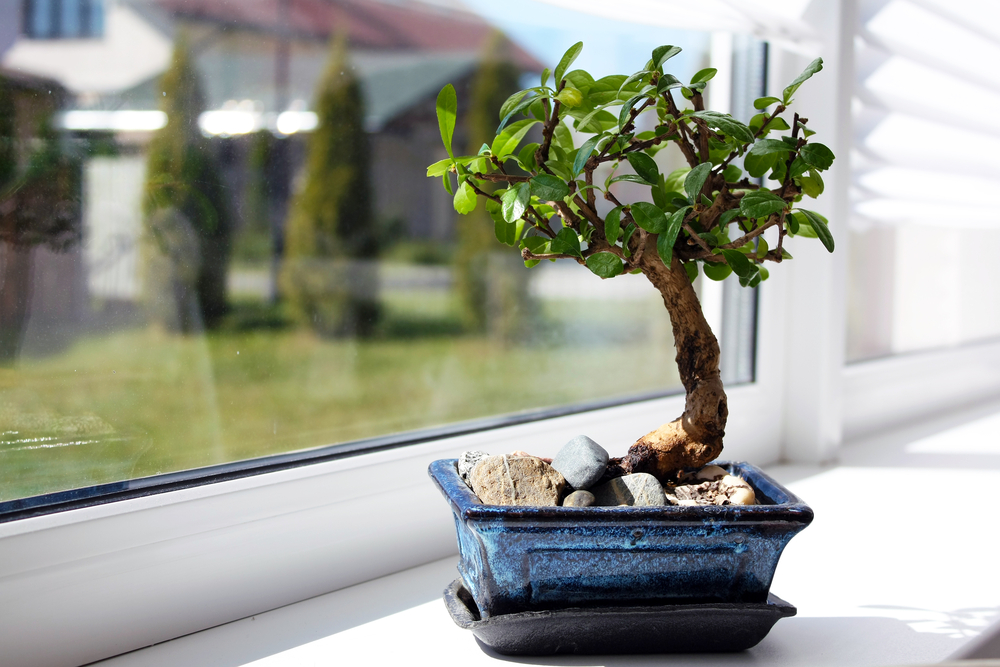 bonsai tree zen interior design