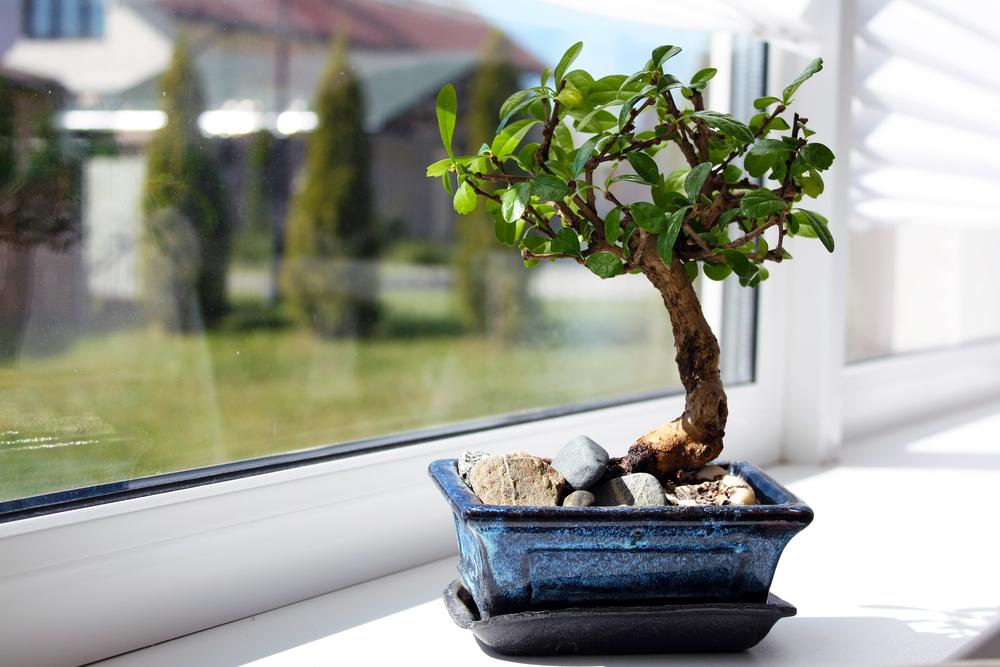 bonsai tree zen interior design